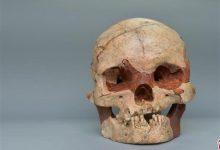صورة علماء آثار يكتشفون جمجمة عمرها مليوني عام لأسلاف البشر