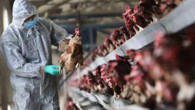 صورة بريطانيا تكتشف بؤرة جديدة لإنفلونزا الطيور في أراضيها