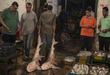 صورة البلطي عند 20 جنيهًا للكيلو.. أسعار السمك والمأكولات البحرية في سوق العبور