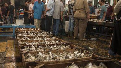 صورة 15 % ارتفاعًا في أسعار الأسماك تزامنا مع موسم المصايف