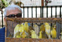 صورة باريس تسكت أصوات العصافير وتغلق سوقا تاريخية للطيور  حياتنا  جهات