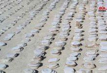 """صورة سوريا تضبط كميات هائلة من المخدرات معدة للتهريب إلى الأردن """"فيديو"""""""