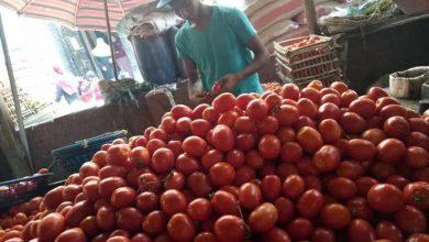 صورة شعبة الخضراوات توضح أسباب ارتفاع الفاصوليا والطماطم في الأسواق