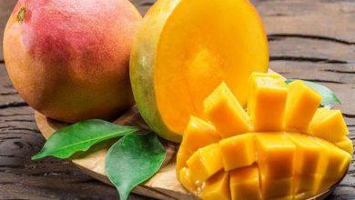 صورة 11 نقطة اعرفها جيدا قبل أكل المانجو حتى لا تكون خطرا على صحتك