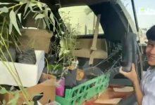 صورة أطلقت رابطة حائل الخضراء مُبادرة تشجير المساحات المحيطة في مقر النادي الأدبي الثقافي بمنطقة حائل وذلك ضمن فعاليات اليوم الوطني السعودي 91  أخبار السعودية