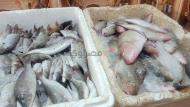 """صورة تراجع كبير لأسعار الأسماك بسوق العبور.. وزيادة طفيفة لـ """"البلطي"""" خلال أسبوع"""