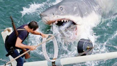 """صورة """"البيئة"""" تفجر مفاجأة عن هجوم سمكة القرش على مواطن بالساحل الشمالي (فيديو)"""